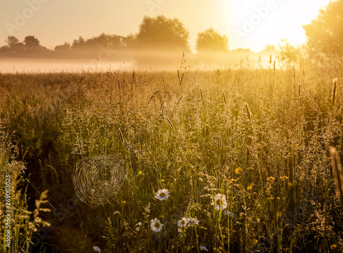 Canvas Prints Honey Early morning in the meadow. A large cobweb and grass in glittering drops of morning dew.