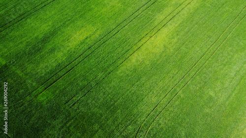 Fotografie, Obraz  aerial view of grass field