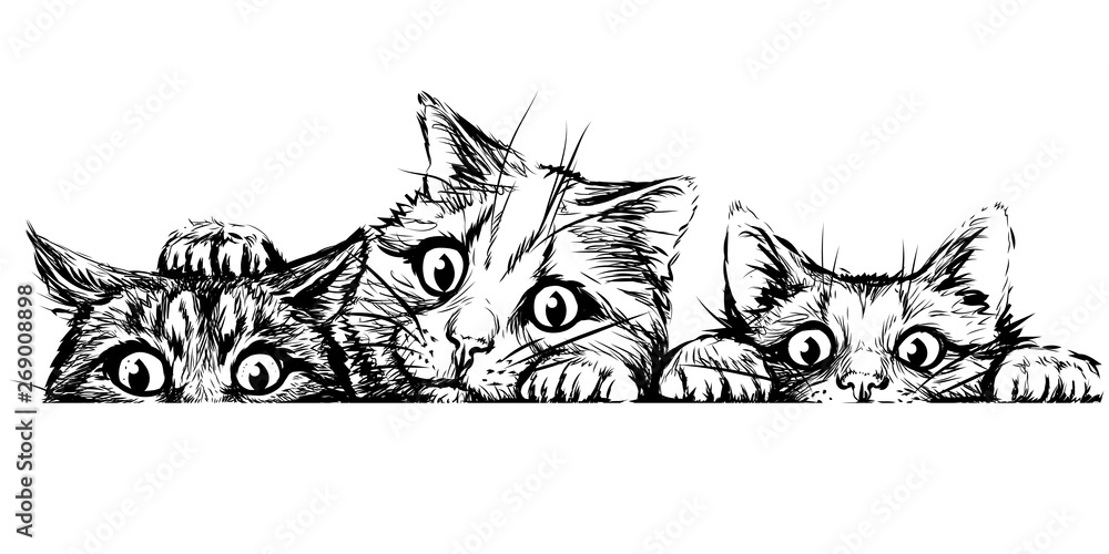 Fototapety, obrazy: Wall sticker. Graphic, black and white hand-drawn sketch depicting three cute cats looking at a horizontal surface.