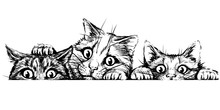 Wall Sticker. Graphic, Black And White Hand-drawn Sketch Depicting Three Cute Cats Looking At A Horizontal Surface.