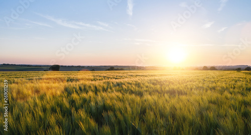 Foto op Aluminium Weide, Moeras Wheat field landscape at sunset, including copy space
