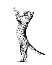 Wall Sticker. Graphic, Black And White Hand-drawn Sketch Depicting  Cat Is Standing On Its Hind Legs, Leaning On The Wall And Looking Up.