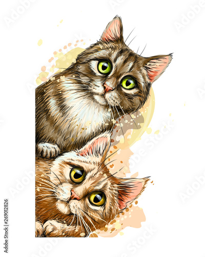 Wall sticker. Graphic, colored hand-drawn sketch with splashes of watercolor depicting two cute cats looking around the corner.
