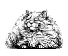 Wall Sticker. Black And White, Graphic, Artistic Drawing Of A Cute Fluffy Cat Is Pretty Squinting In The Sun.