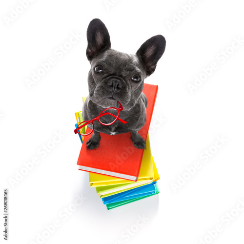 Fotobehang Crazy dog smart dog and books
