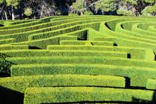 Labyrinth Plant Surface
