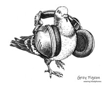 Hand Drawn City Grey Pigeon We...