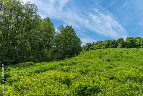 Valokuva European summer landscape - forest in the hills on a sunny day