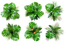 Set Of Six Bouquets Of Various Fresh Tropical Leaves And Flowers Isolated On White Background. Top View, Flat Lay, Clipping Paths.