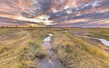 Channel In Tidal Marshland Nature Reserve Saeftinghe
