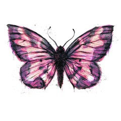 Hand painted watercolour moth / butterfly with paint splatter No. 12c