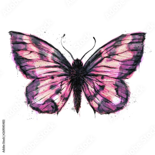 Photo sur Toile Papillons dans Grunge Hand painted watercolour moth / butterfly with paint splatter No. 12c