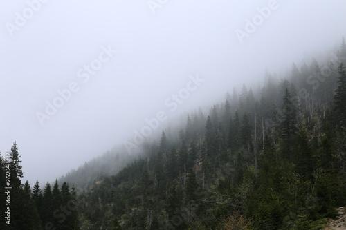 Autocollant pour porte Kaki fog in forest