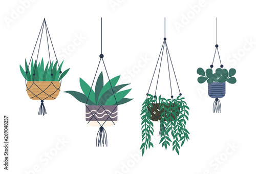House plants placed in hanging pots vector, isolated set of houseplants with foliage Fototapeta