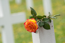 Closeup Of Orange Rose On Tomb At Military Cemetery