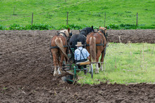 Amish Farmer Plowing Field Wit...