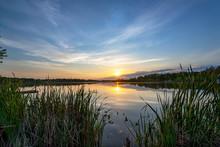 Sun On The Horizon Over Calm Lake Waters Through Cattail