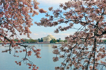 WASHINGTON, DC -6 APRIL 2019- View Of The Thomas Jefferson Memorial, A Landmark Monument By The Tidal Basin During The Cherry Blossom Season In The Nation's Capital.