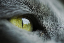 Macro Shot Of Cat Eye