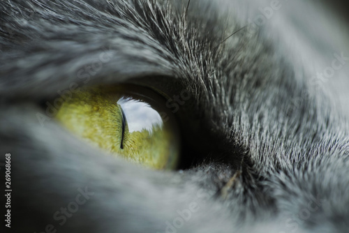 Photo  Macro shot of cat eye