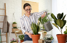 Young Woman Watering Potted Pl...