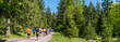 Leinwanddruck Bild - People trail running in a forest panorama