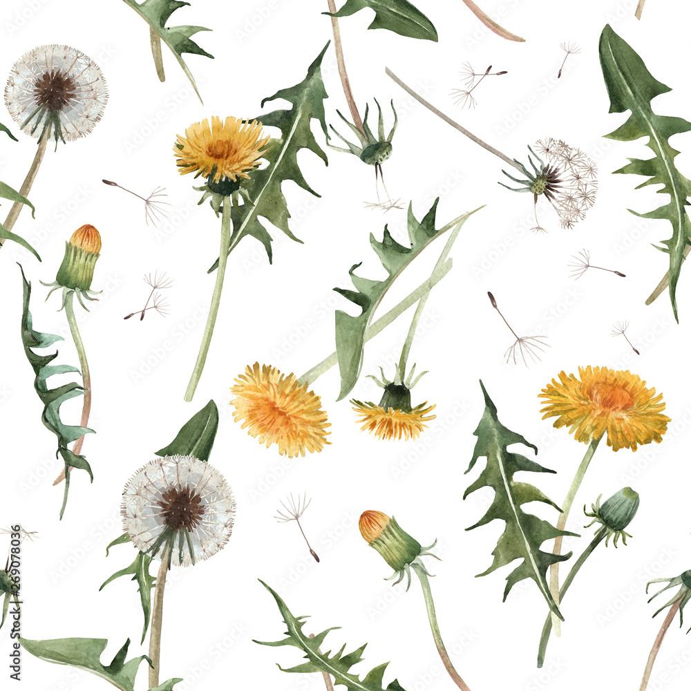 Fototapety, obrazy: Watercolor dandelion blowball floral seamless pattern