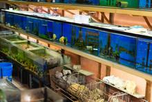 Aquariums In Pet Shop