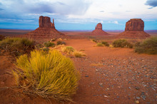 Tumble Weed In Monument Valley
