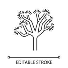Joshua Tree Linear Icon