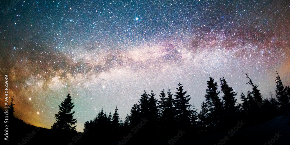 Fototapety, obrazy: Milky Way over the Fir-trees