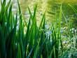 Leinwandbild Motiv Lakeside Plants