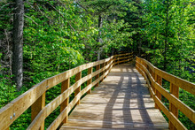 Boardwalk, Part Of The Trail, ...