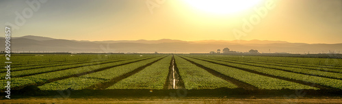 Ingelijste posters Cultuur Growing Fields Of California
