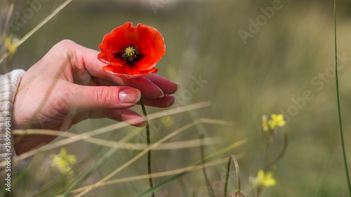 Valokuva  Close up photo of woman's hand in sweater holding delicately with her fingers wi