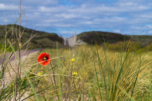 Fotografie, Tablou Landscape of meadow and hills of Vlieland island of Frisian islands with lonely