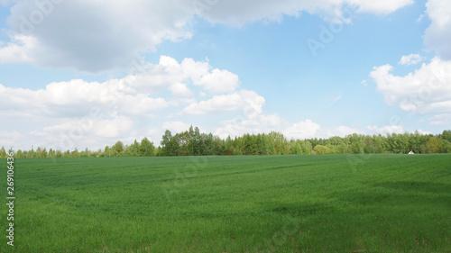 Foto op Plexiglas Weide, Moeras Green field, trees and blue sky.Great as a background