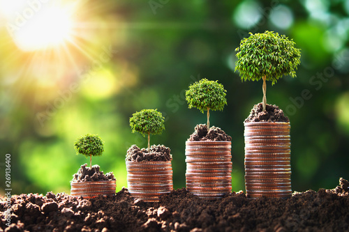 Fotografia  money growing step with tree and sunrise