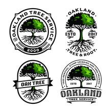 Set Oak Tree And Root Logo Tem...
