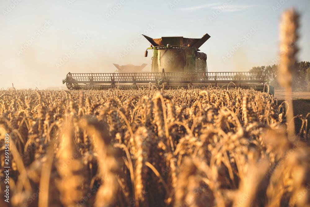 Fototapety, obrazy: Mähdrescher bei der Ernte auf einem Getreidefeld