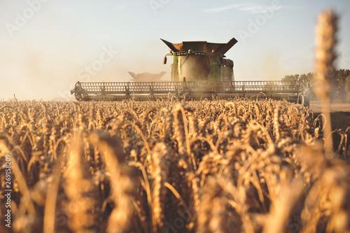 Obraz Mähdrescher bei der Ernte auf einem Getreidefeld - fototapety do salonu