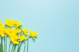 Spring floral background. Yellow narcissus or daffodil flowers on blue background top view flat lay. Easter concept, International Women's Day, March 8, holiday. Card with flowers. Place for text