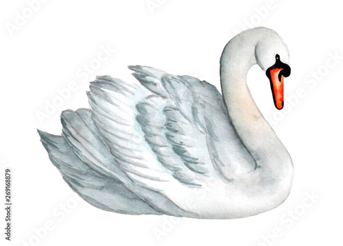 Fototapeta Watercolor white swan illustration, romantic and beautiful bird