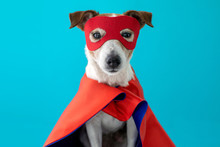 Dog Super Hero Costume. Little...