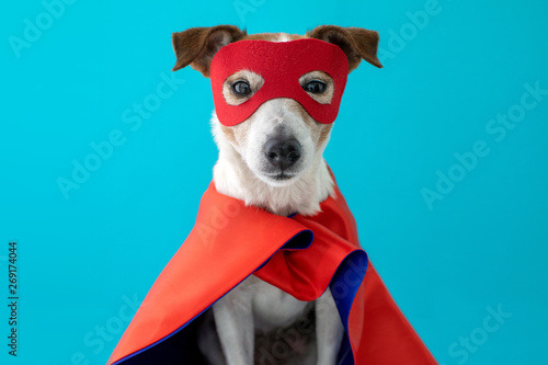 Fototapeta Dog super hero costume