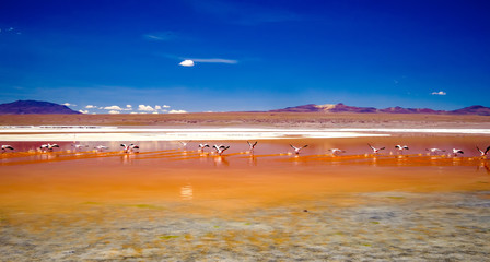 Fototapeta Romantyczny Pink flamingos at exciting lagoon scenery in Bolivia