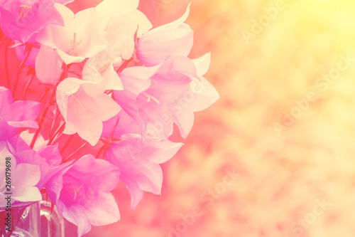 Photo Stands Candy pink Vintage harebell flowers. Bouquet of summer flowers natural background. Pastel color. Out of color effect.