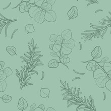 Seamless Pattern Branches Of Eucalyptus. Green Floral Background .Vector Beauty Soft Green Elegant Background.
