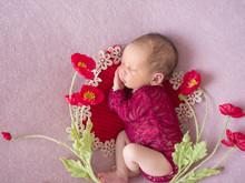 Beautiful Newborn Baby Sleeps On The Background Of Flowers