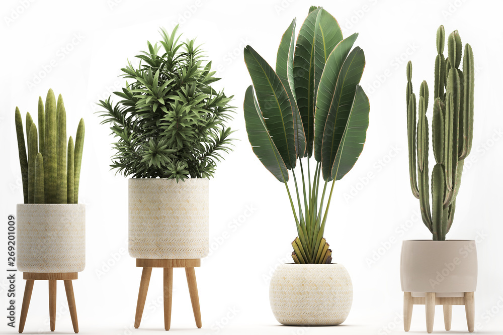 Fototapety, obrazy: collection of ornamental plants in pots